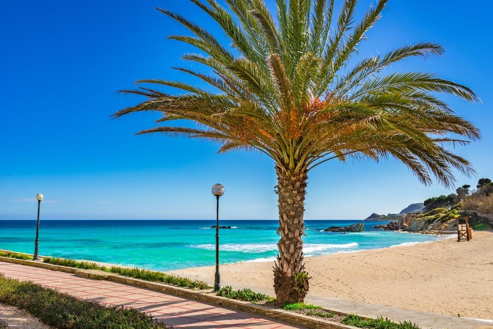 Detalle de palmera en playa Son Moll, Cala Ratjada, Mallorca
