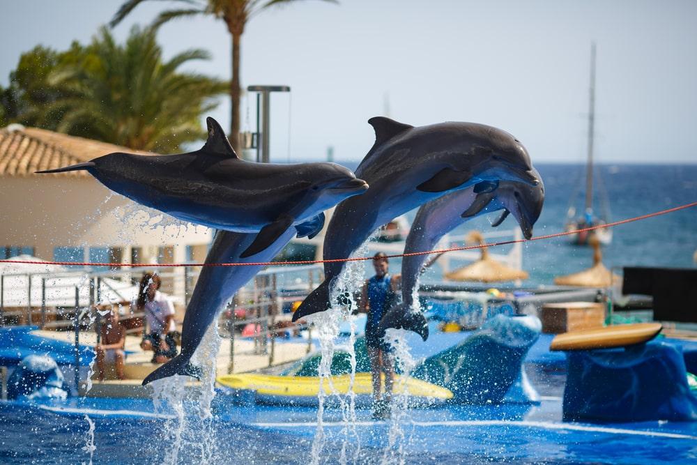 Show de delfines en el Aquarium de Palma de Mallorca