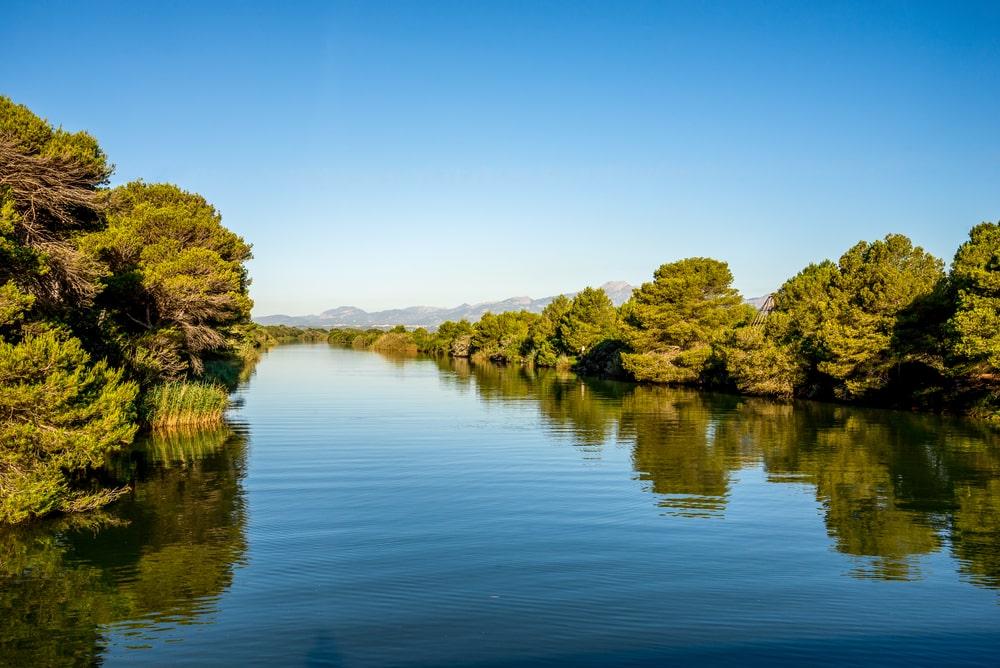 Laguna en Parque Natural de S'Albufera en Alcudia, Mallorca